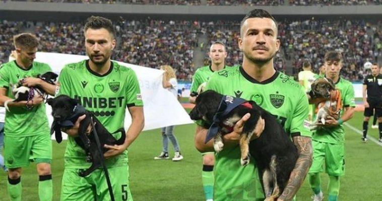 Romania adottate i cani share hibet social